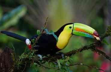 Découverte du Costa Rica authentique - Loin des lieux de grande affluence nous irons découvrir les plus beaux parcs nationaux pour observer des animaux qui ne sont pas habitués à la présence de l'homme.