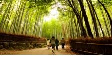 Circuit explore : Les essentiels du Japon - De Fukuoka à Tokyo en passant par Hiroshima, vous découvrirez l'effervescence des villes japonaises. Vous apprécierez également des instants paisibles sur l'île sacrée de Miyajima, au sommet de la montagne de Koyasan ou encore du haut du mont Fuji. Au cœur du voyage : la découverte de la vie locale !