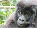 Trek Gorilles