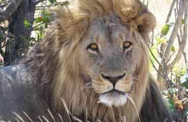 SAFARI AU BOTSWANA & CHUTES VICTORIA - Un safari photographique idéal pour observer la grande faune africaine et découvrir les différents écosystèmes du Botswana. Après la visite des fameuses Chutes Victoria, vous partez à la découverte de la partie nord du parc de Chobe, dite River Front. Vous explorez ensuite sa partie sud-ouest et les vastes espaces sauvages de Savuti avant de découvrir la région de Khwai et la partie Est de la réserve de Moremi. Vous terminez votre séjour par une immersion au cœur du Delta de l'Okavango.