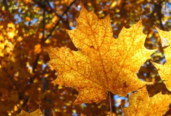 AMERIQUEDUNORD-canada-paysage-feuilles-alisair-williamson