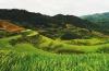 ASIE-vietnam-paysage-risières