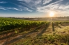 CULTURE-ET-PATRIMOINE-oenotourisme-champ-vigne