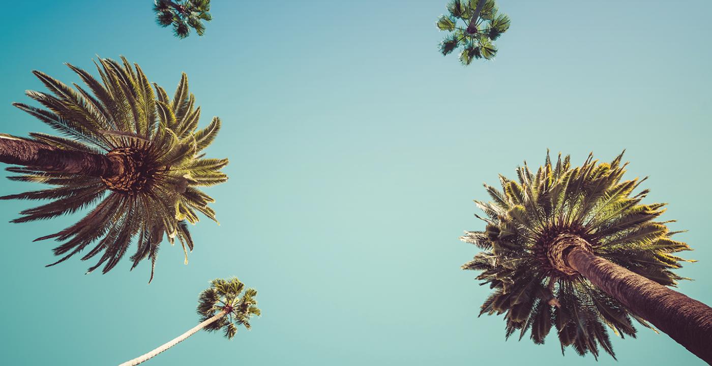 Ciel avec palmiers