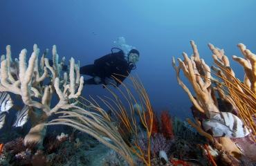 BANQUE-Images-Generique-plongée-corail-NOAA's