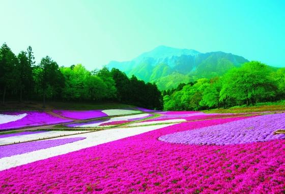 Photo du Petit Futé sur le Japon